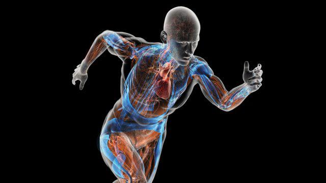 functional anatomy physiology vtct sports Anatomy - vtct level 3 award in anatomy  you the underpinning knowledge  of anatomy required for an array of beauty and sports courses  to gain  knowledge of the anatomical structure and the physiological function of the body  systems.